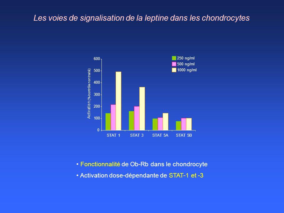 Les voies de signalisation de la leptine dans les chondrocytes