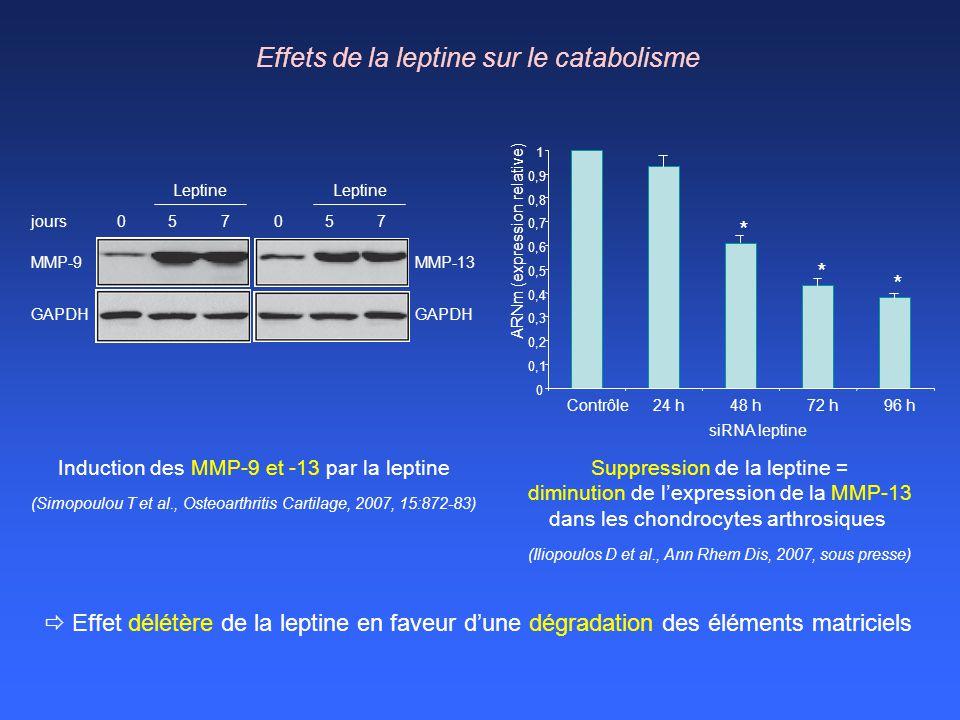 Effets de la leptine sur le catabolisme