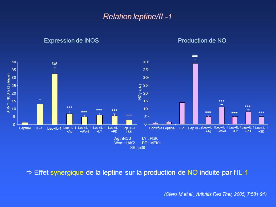 Relation leptine/IL-1 Expression de iNOS. Production de NO. 5. 10. 15. 20. 25. 30. 35. 40.