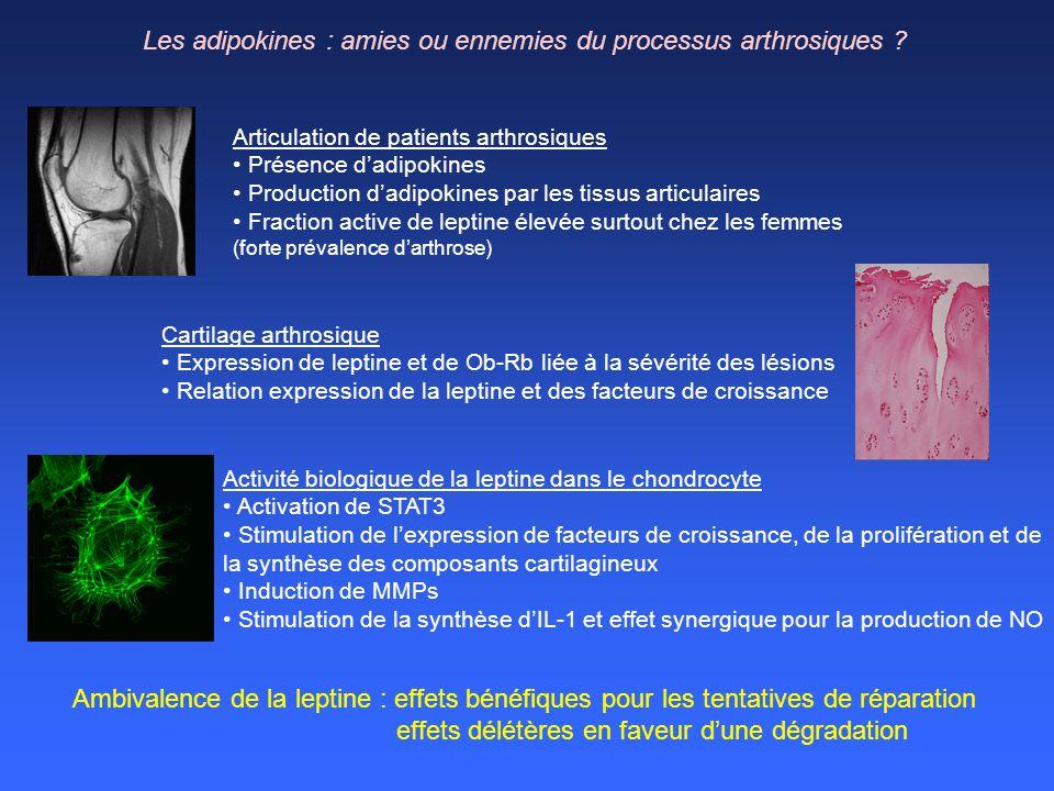 Les adipokines : amies ou ennemies du processus arthrosiques
