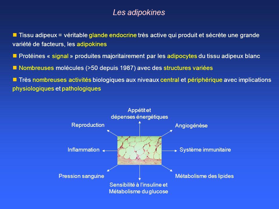 Les adipokines Tissu adipeux = véritable glande endocrine très active qui produit et sécrète une grande variété de facteurs, les adipokines.