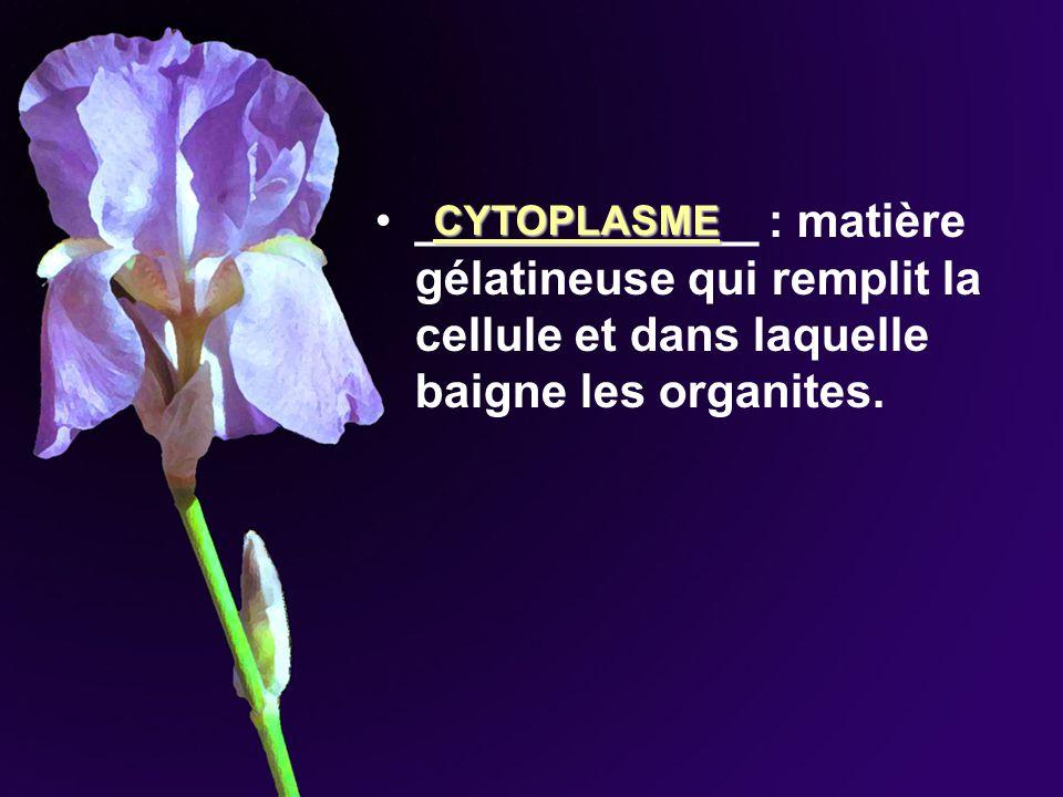_____________ : matière gélatineuse qui remplit la cellule et dans laquelle baigne les organites.