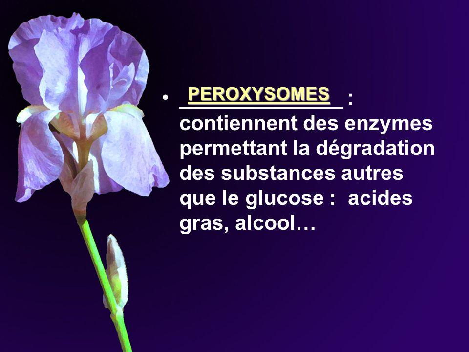 ______________ : contiennent des enzymes permettant la dégradation des substances autres que le glucose : acides gras, alcool…