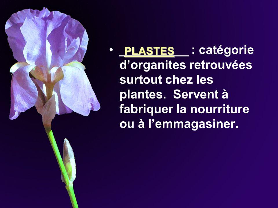 __________ : catégorie d'organites retrouvées surtout chez les plantes