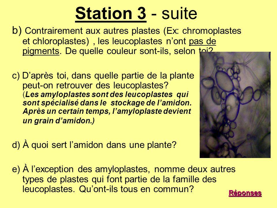 Station 3 - suite