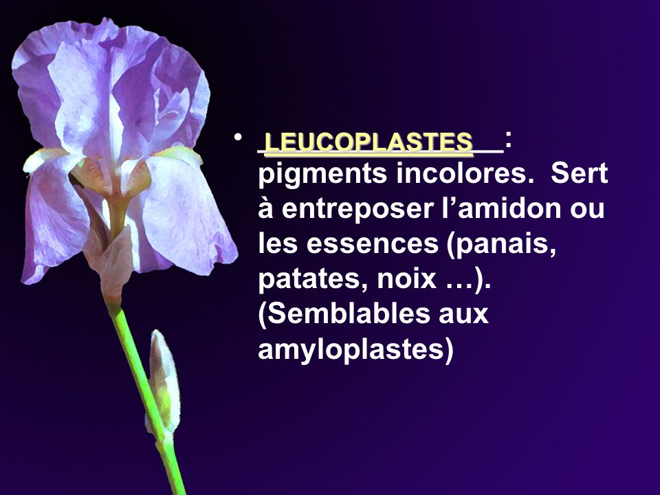 _______________: pigments incolores