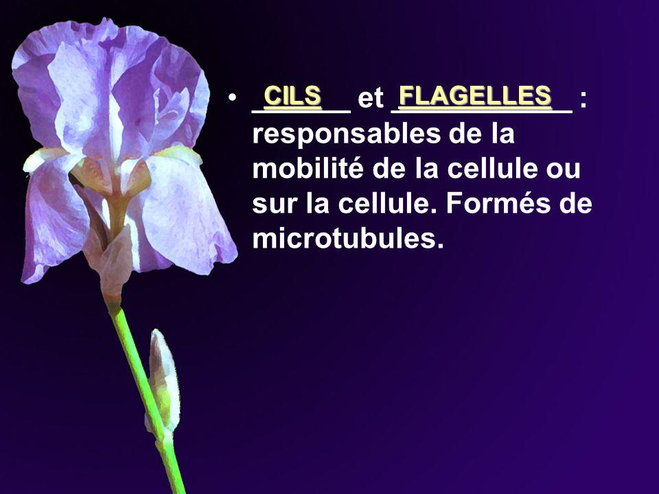 ______ et ___________ : responsables de la mobilité de la cellule ou sur la cellule. Formés de microtubules.