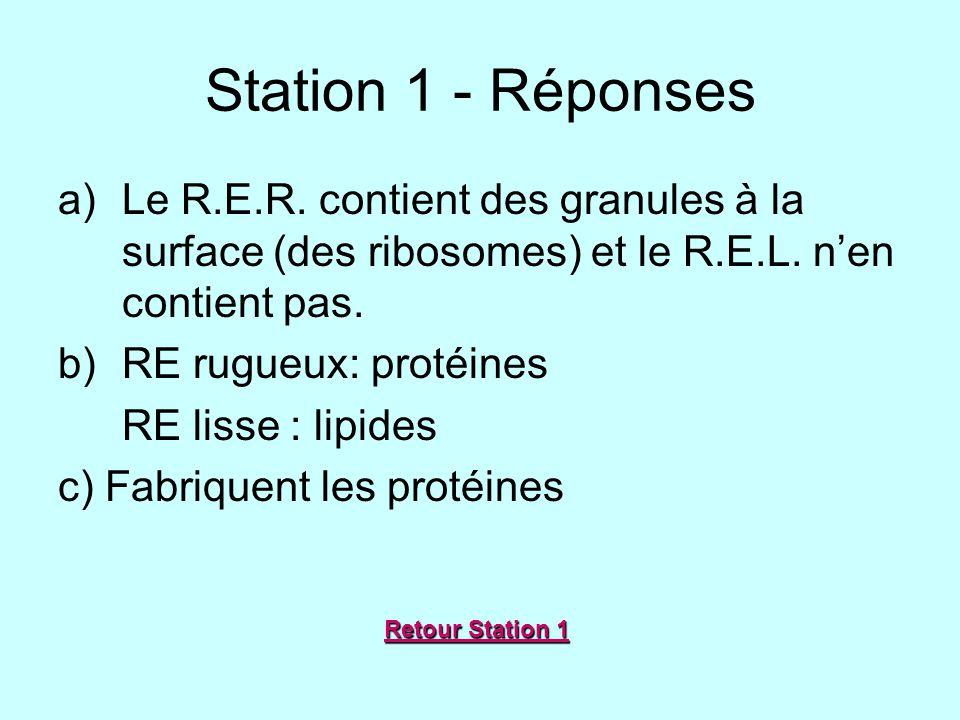 Station 1 - Réponses Le R.E.R. contient des granules à la surface (des ribosomes) et le R.E.L. n'en contient pas.