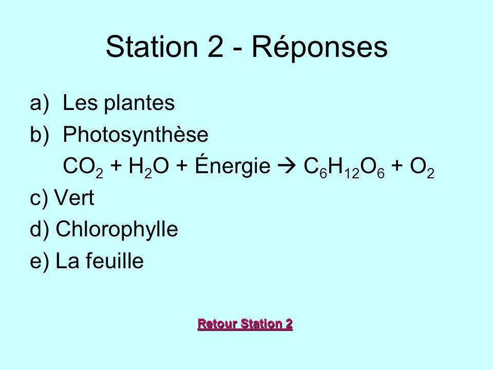 Station 2 - Réponses Les plantes Photosynthèse
