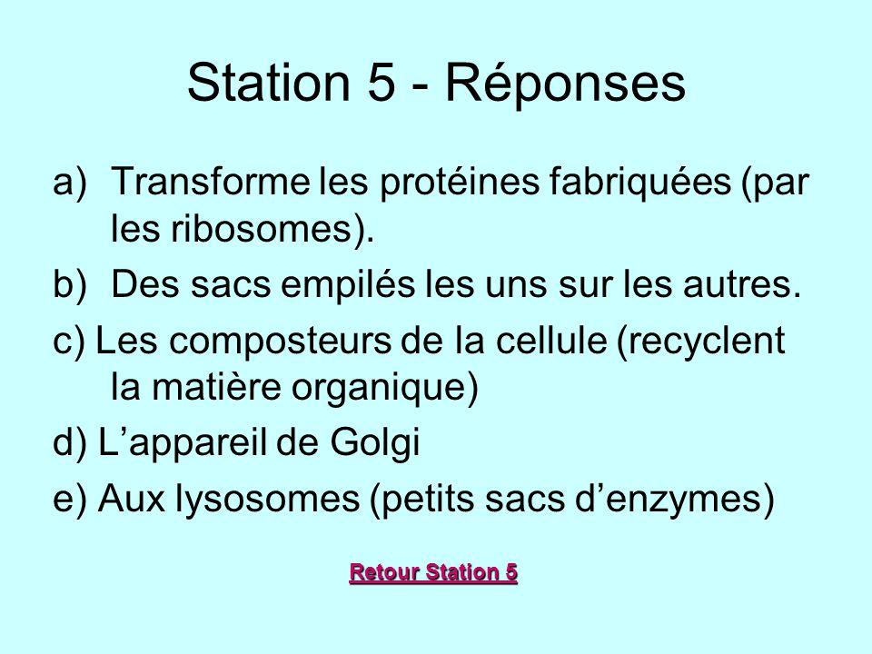 Station 5 - Réponses Transforme les protéines fabriquées (par les ribosomes). Des sacs empilés les uns sur les autres.