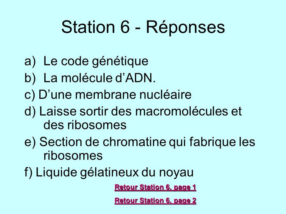 Station 6 - Réponses Le code génétique La molécule d'ADN.