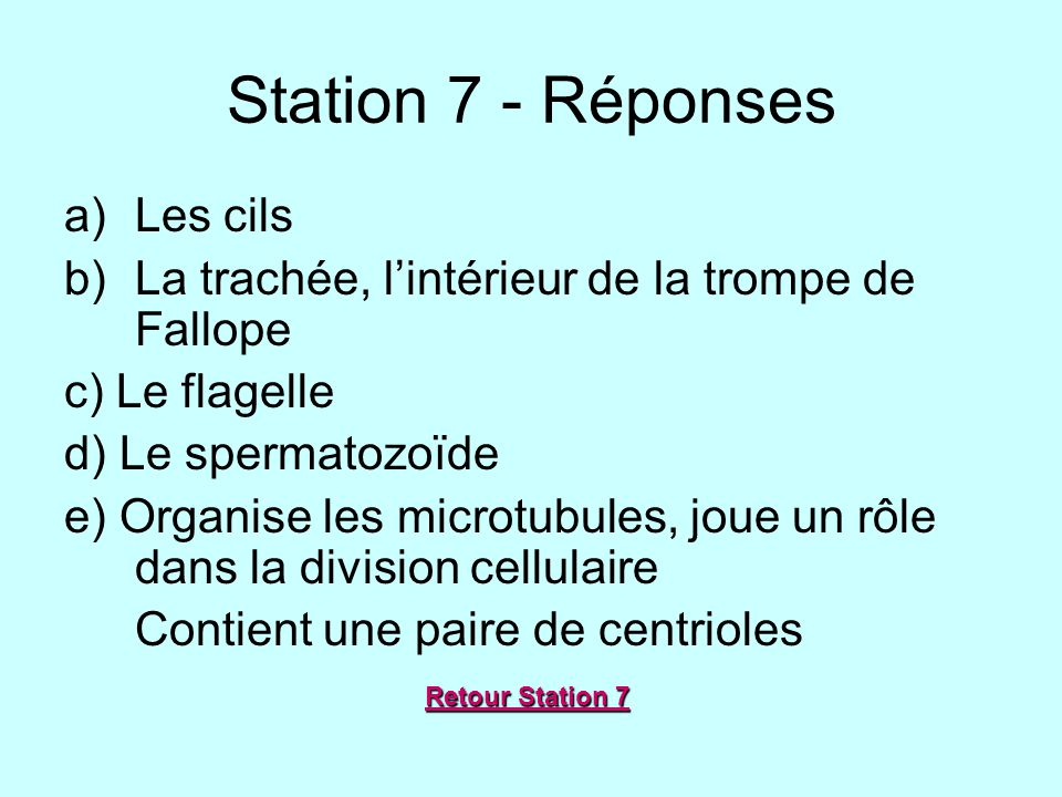 Station 7 - Réponses Les cils