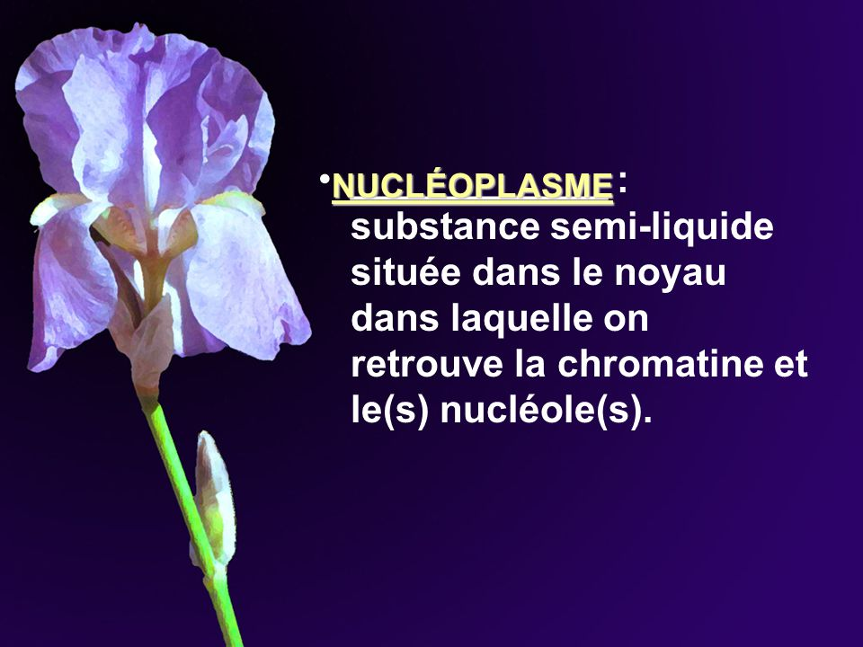 ____________ : substance semi-liquide située dans le noyau dans laquelle on retrouve la chromatine et le(s) nucléole(s).