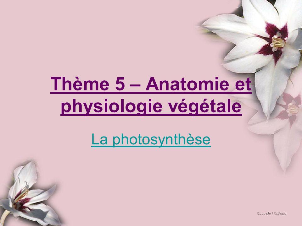 Thème 5 – Anatomie et physiologie végétale
