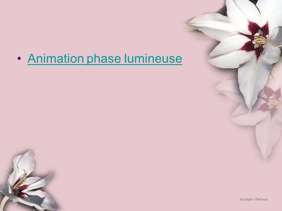 Animation phase lumineuse