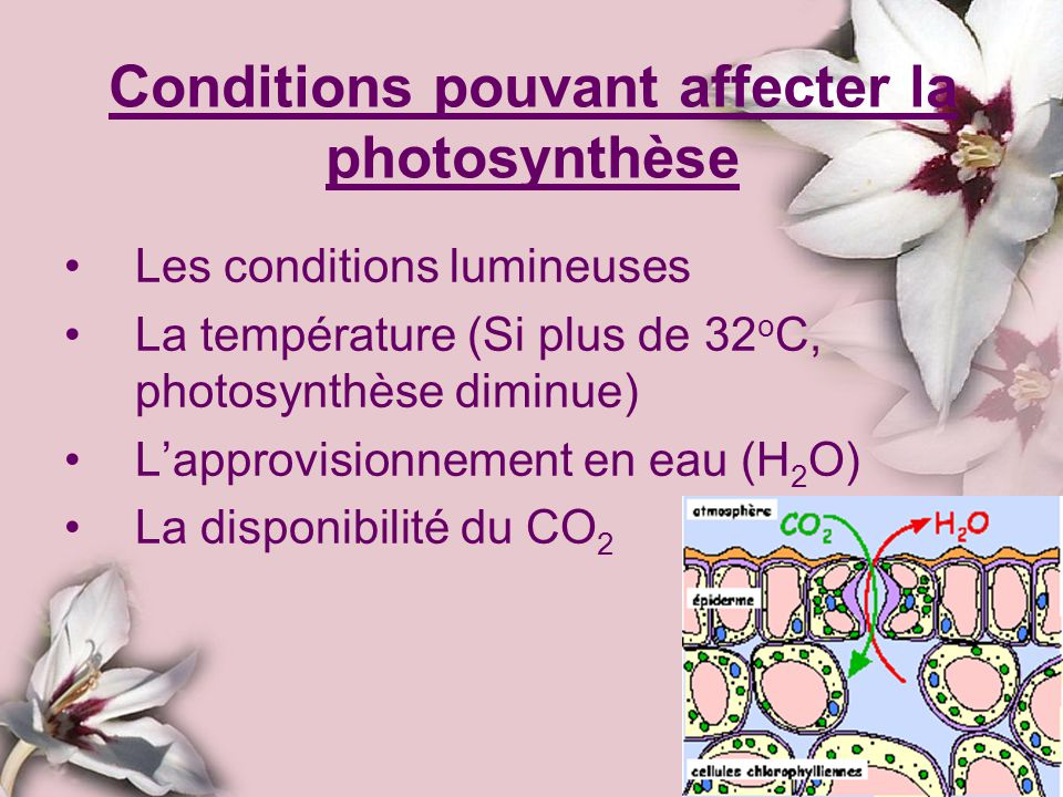 Conditions pouvant affecter la photosynthèse