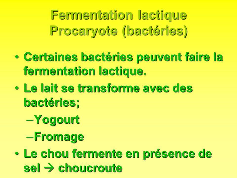 Fermentation lactique Procaryote (bactéries)