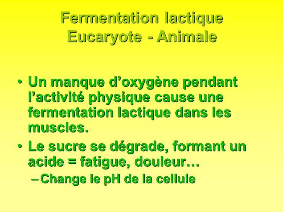 Fermentation lactique Eucaryote - Animale