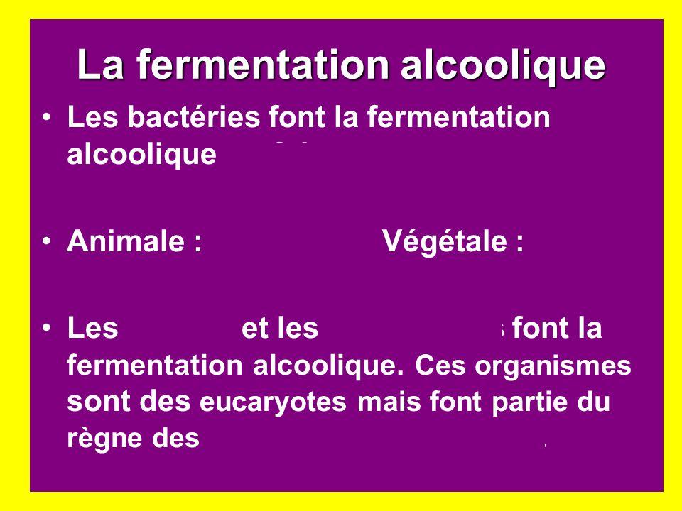 La fermentation alcoolique