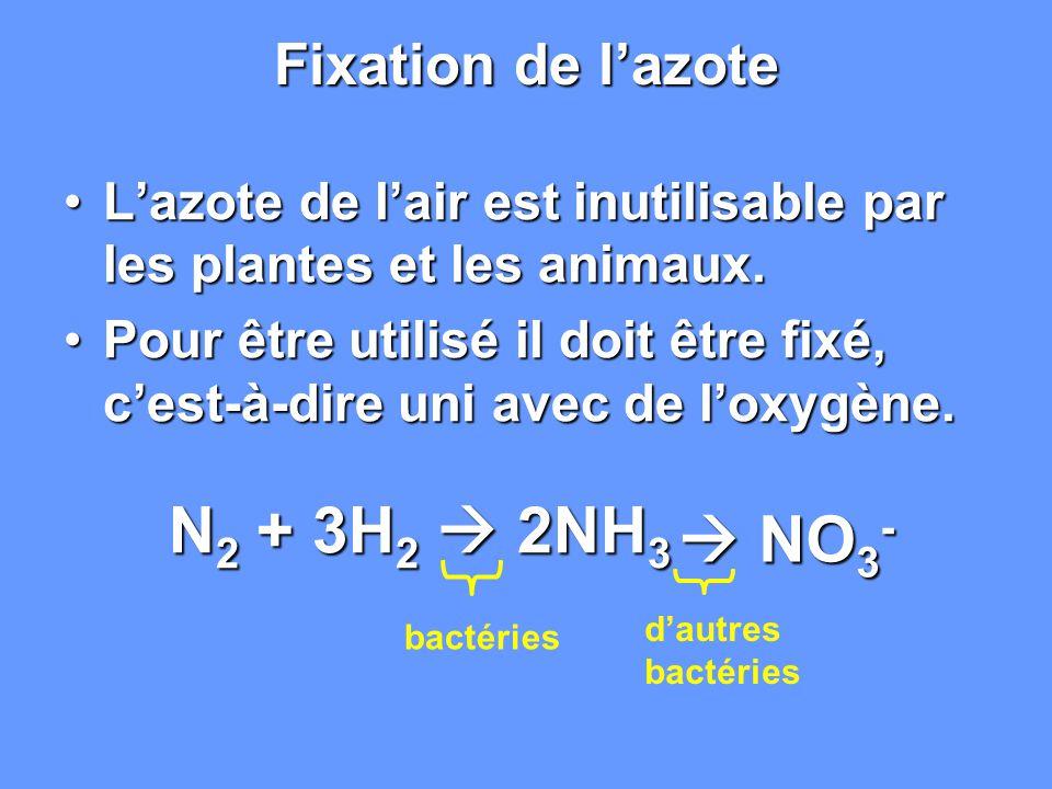  NO3- Fixation de l'azote