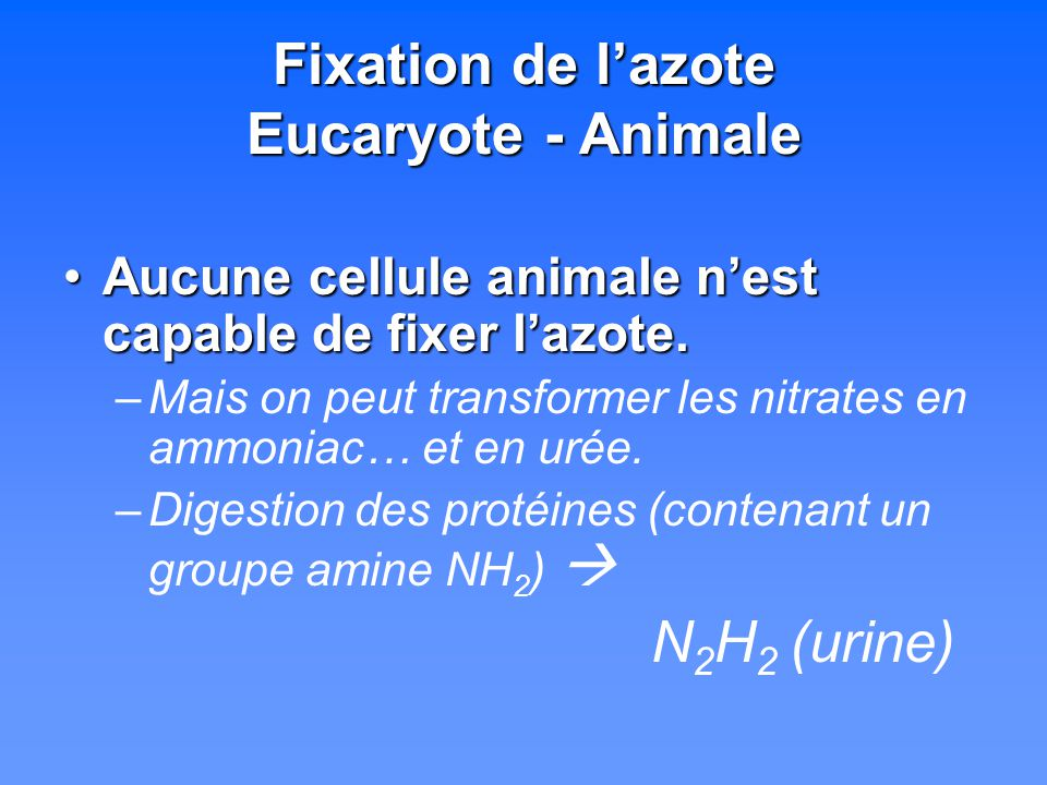 Fixation de l'azote Eucaryote - Animale