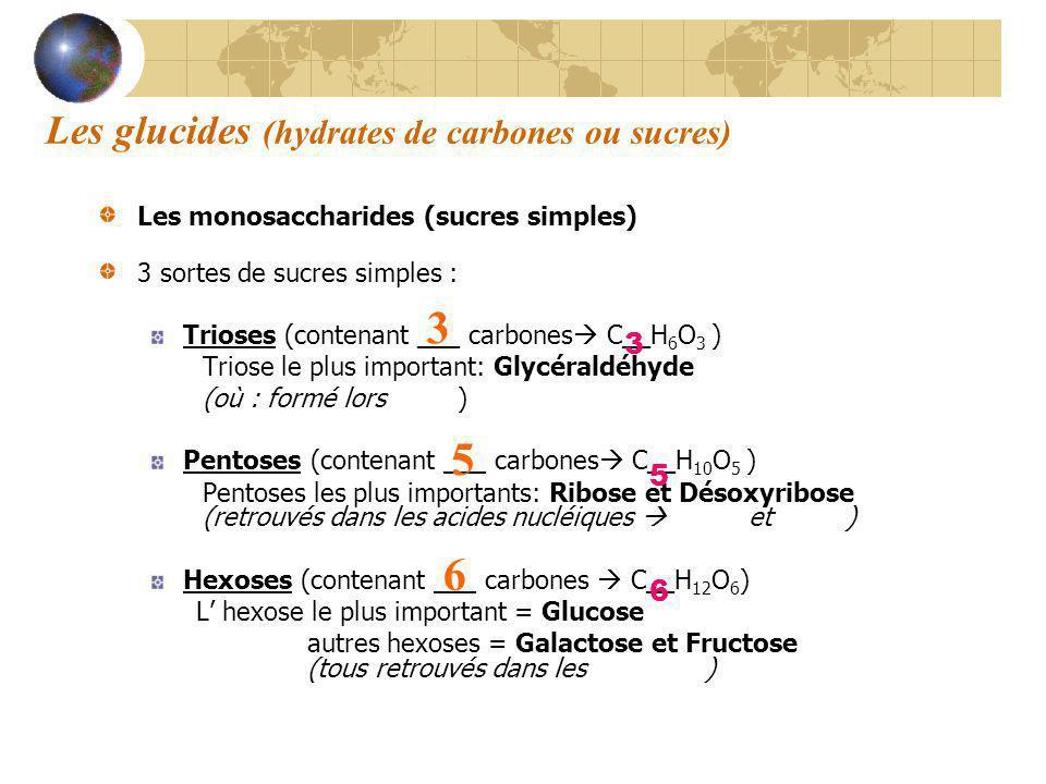 3 5 6 Les glucides (hydrates de carbones ou sucres) 3 5 6