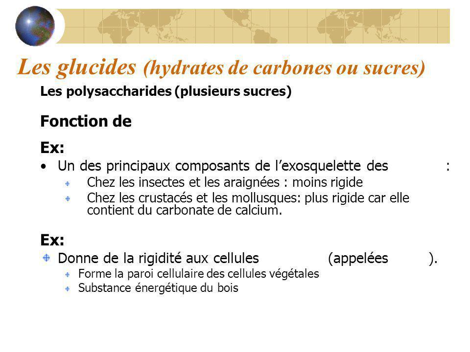 Les glucides (hydrates de carbones ou sucres)