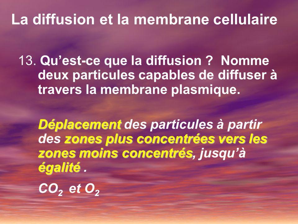 La diffusion et la membrane cellulaire