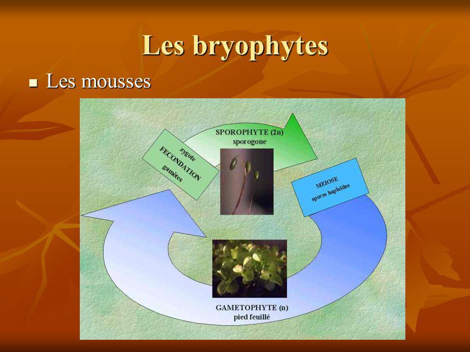 Les bryophytes Les mousses