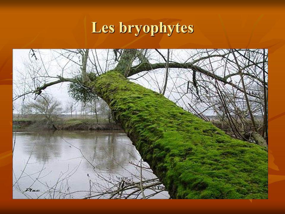 Les bryophytes