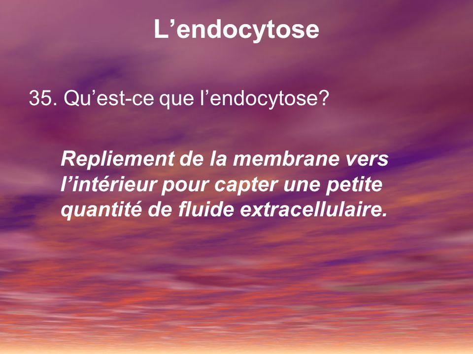 L'endocytose 35. Qu'est-ce que l'endocytose