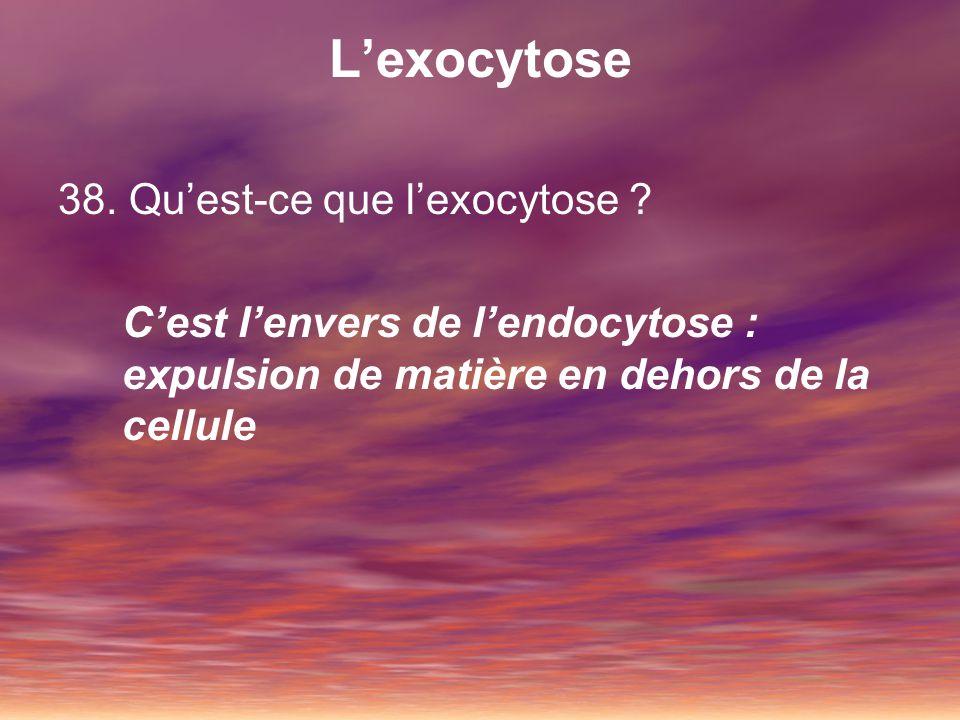 L'exocytose 38. Qu'est-ce que l'exocytose