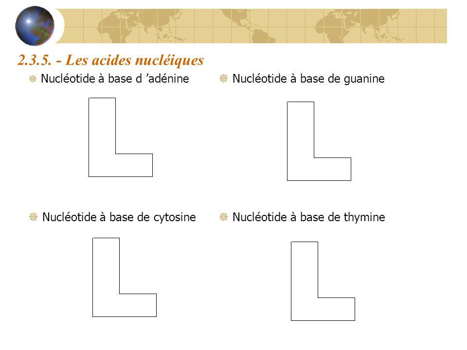 2.3.5. - Les acides nucléiques