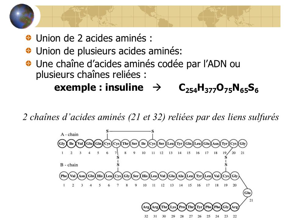 Union de 2 acides aminés : dipeptide