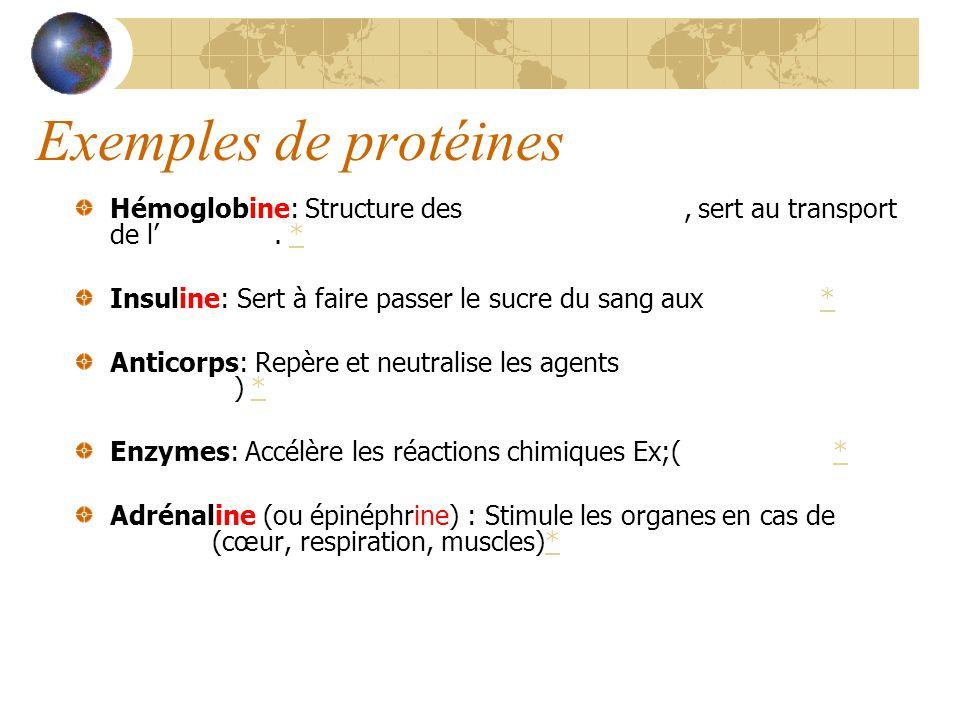 Exemples de protéines Hémoglobine: Structure des globules rouges, sert au transport de l'oxygène. *