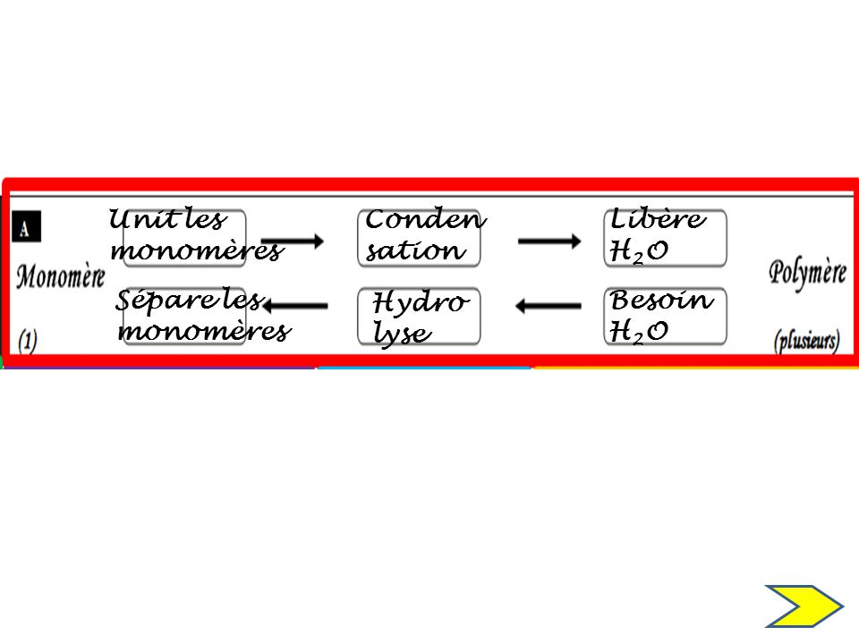 Unit les monomères Conden sation Libère H2O Sépare les monomères Hydro lyse BesoinH2O