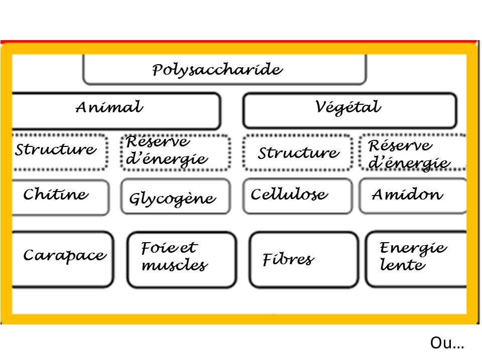Ou… Polysaccharide Animal Végétal Réserve d'énergie Réserve d'énergie
