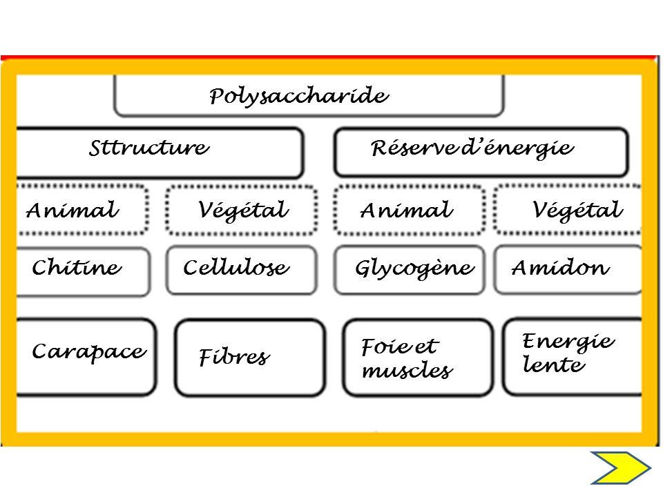 Polysaccharide Sttructure. Réserve d'énergie. Animal. Végétal. Animal. Végétal. Chitine. Cellulose.