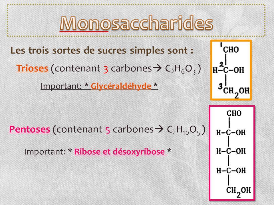 Monosaccharides Les trois sortes de sucres simples sont :