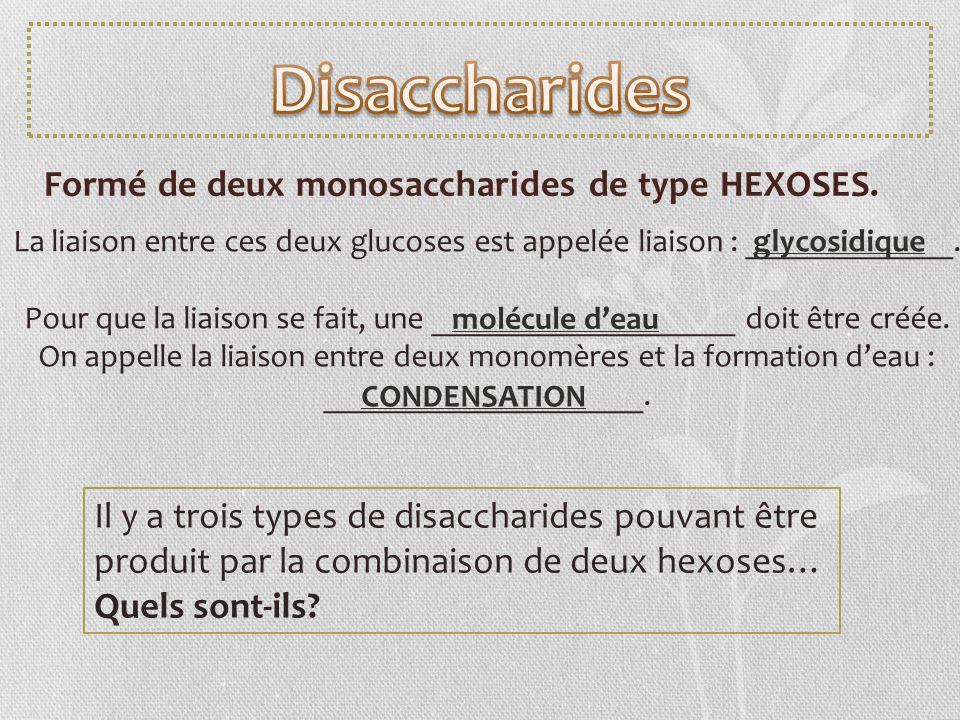 Disaccharides Formé de deux monosaccharides de type HEXOSES.