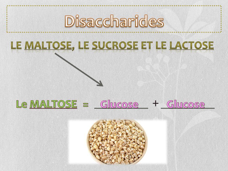 Disaccharides + Le MALTOSE, le SUCROSE et le LACTOSE Le MALTOSE =