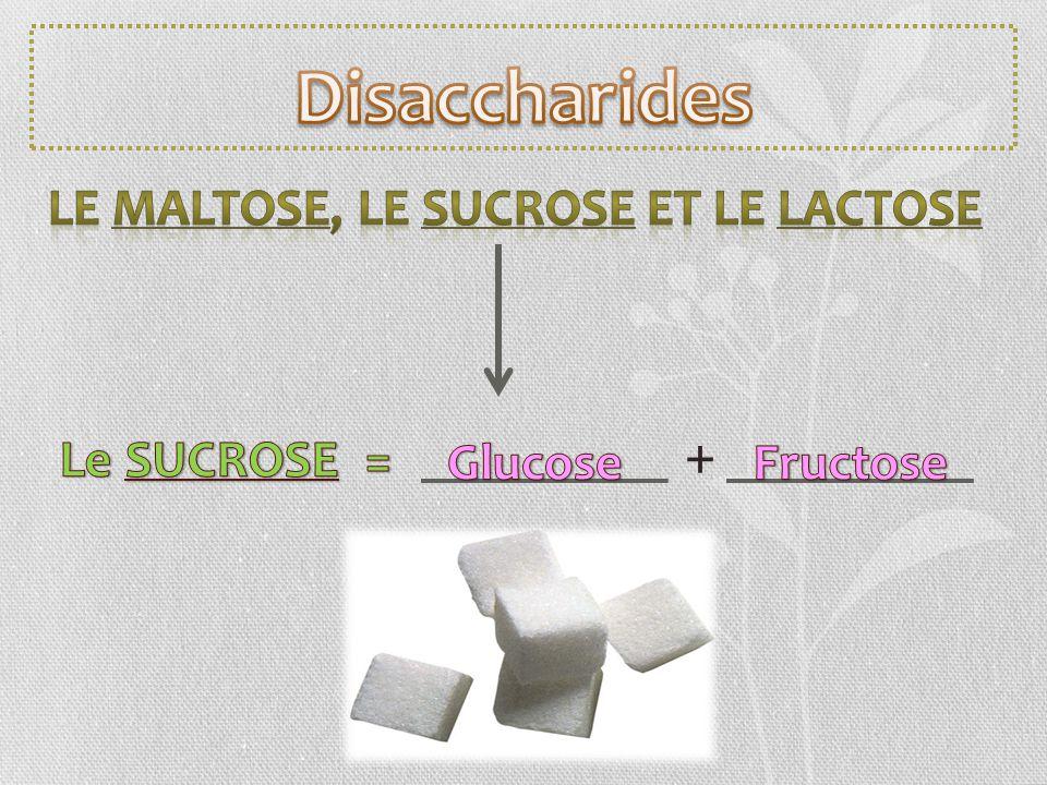 Disaccharides + Le MALTOSE, le SUCROSE et le LACTOSE Le SUCROSE =