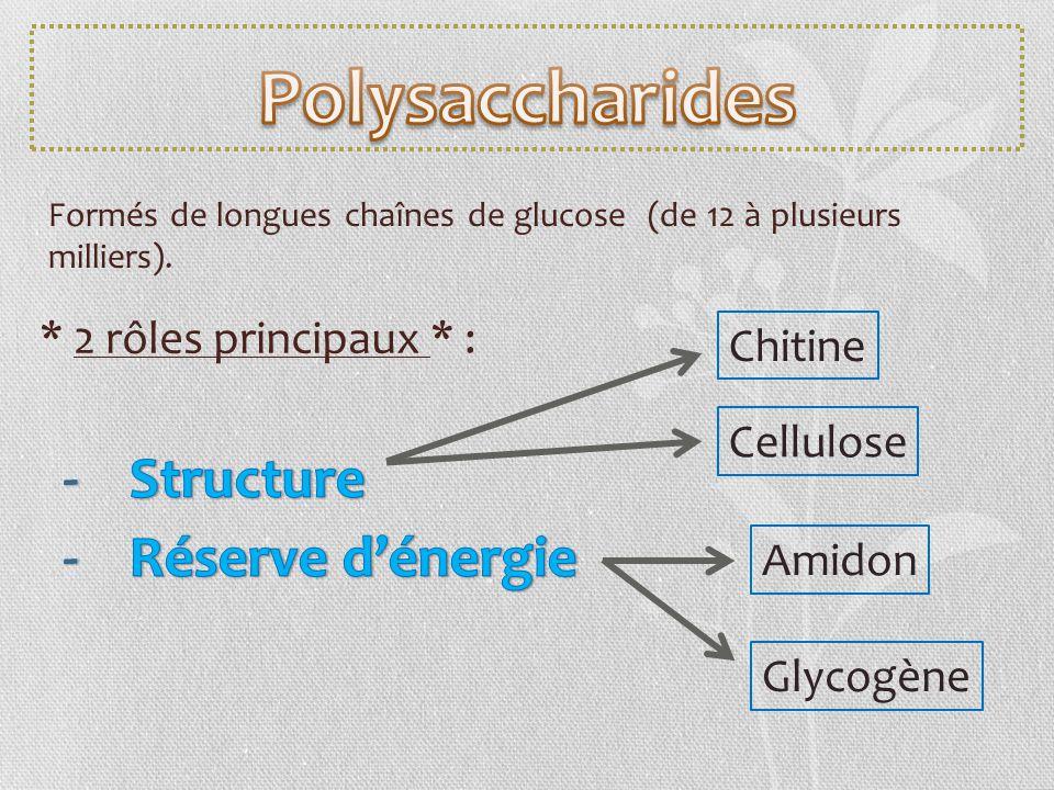 Polysaccharides Structure Réserve d'énergie * 2 rôles principaux * :