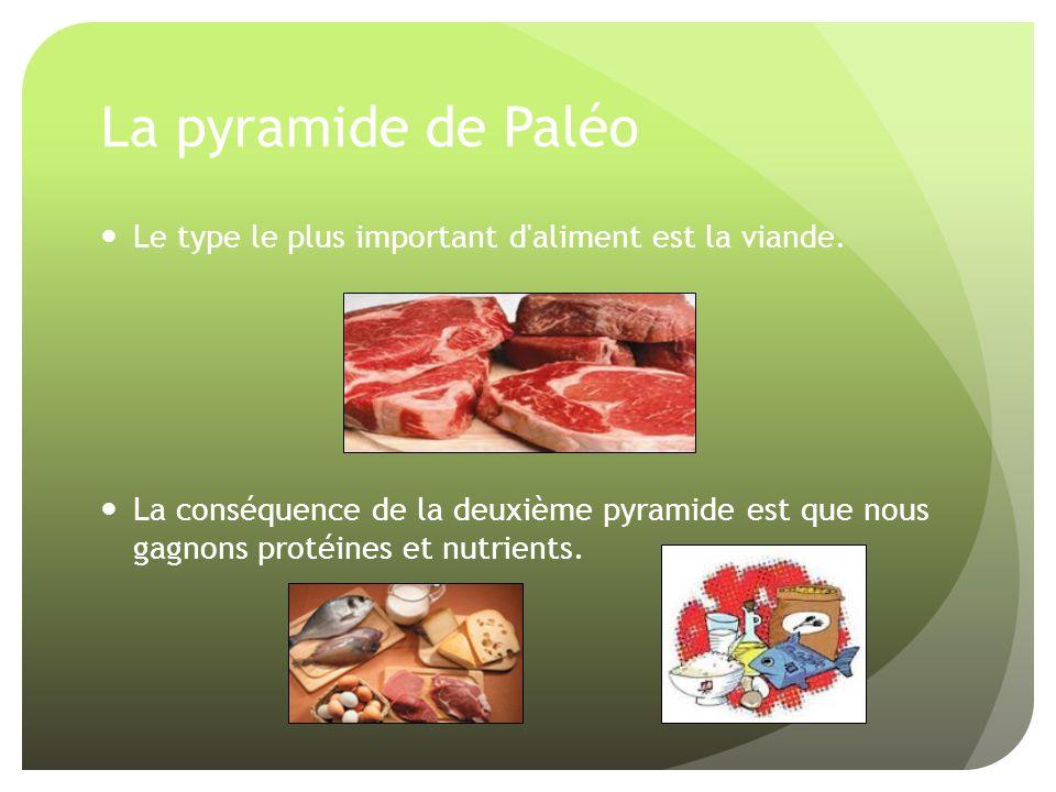 La pyramide de Paléo Le type le plus important d aliment est la viande.