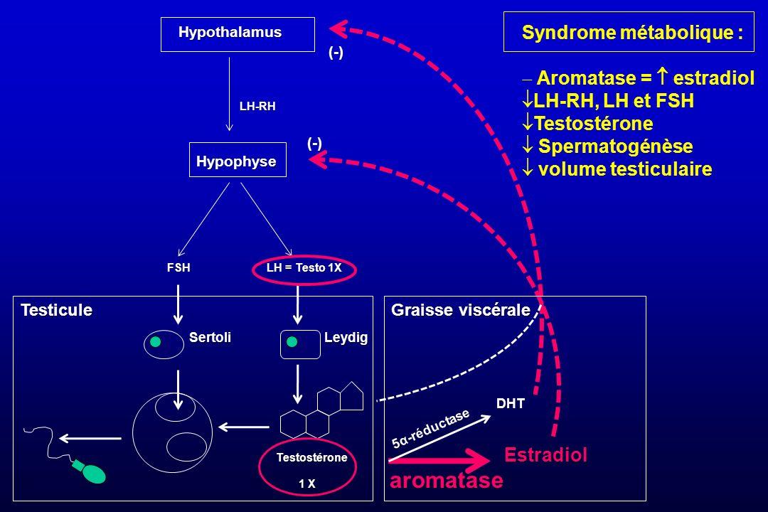 Hypothalamus LH-RH Syndrome métabolique : Aromatase =  estradiol