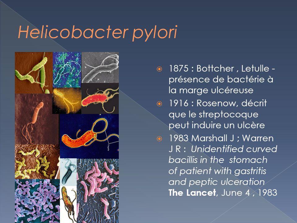 Helicobacter pylori 1875 : Bottcher , Letulle - présence de bactérie à la marge ulcéreuse.