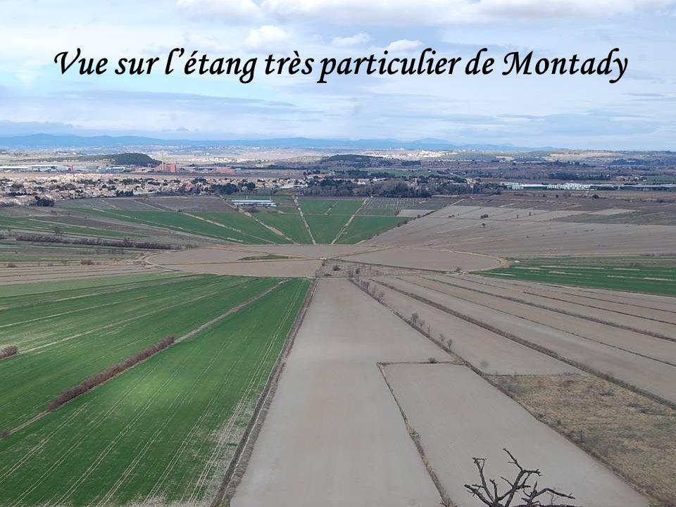 Vue sur l'étang très particulier de Montady