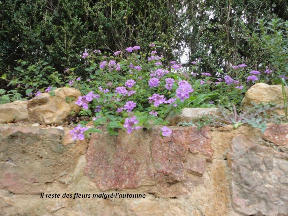 Il reste des fleurs malgré l'automne