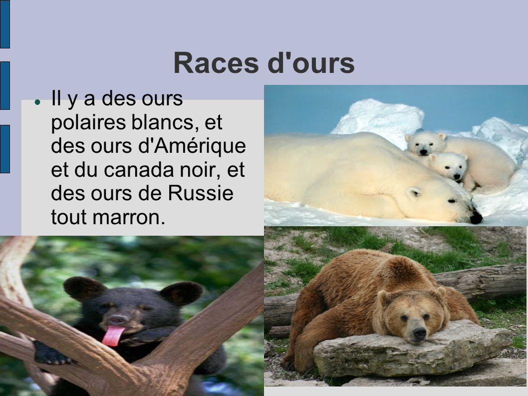 Races d ours Il y a des ours polaires blancs, et des ours d Amérique et du canada noir, et des ours de Russie tout marron.