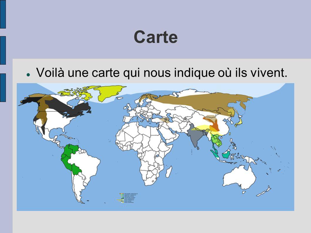 Carte Voilà une carte qui nous indique où ils vivent.